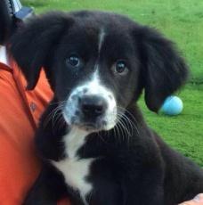 Anna - Adopted 2014!