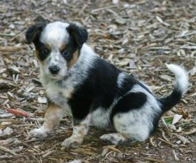 Basil - Adopted 2014!