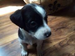 Boo - Adopted 2014!