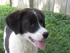 Cady - Adopted 2014!