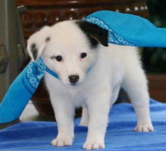 Calla - Adopted 2014!