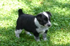 Cati - Adopted 2014!