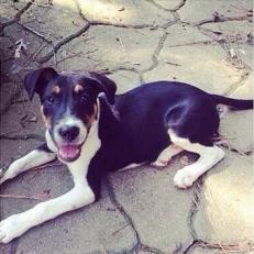 Duke - Adopted 2014!