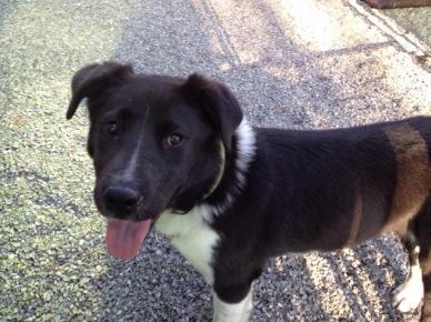 Elvis - Adopted 2014!