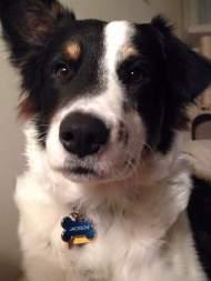 Fenton - Adopted 2015!