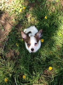 Finn - Adopted 2014!