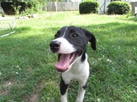 Gretchen - Adopted 2014!