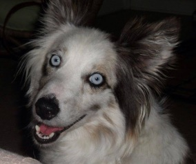 Helen - Adopted 2014!
