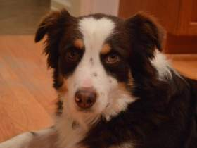 Huey - Adopted 2015!