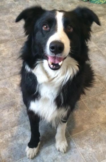 Jack - Adopted 2015!