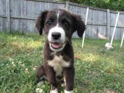 Karen - Adopted 2014!