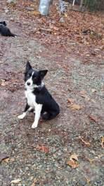 Kiera - Adopted 2015!