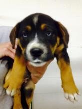 Leeonna - Adopted 2015!