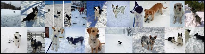 Alumni Snow 2015