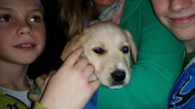 Zeus - Adopted 2014!