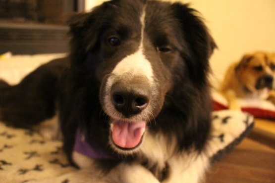 Quincy - Adopted 2014!