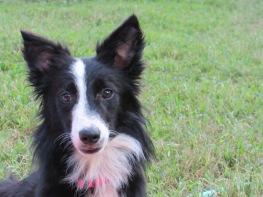 Rachel - Adopted 2014!