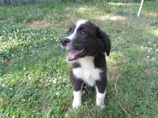 Regina - Adopted 2014!