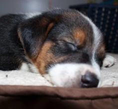 Rosa - Adopted 2014!