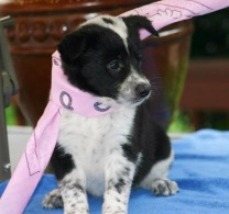 Rose - Adopted 2014!