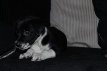 Yoshi - Adopted 2014!