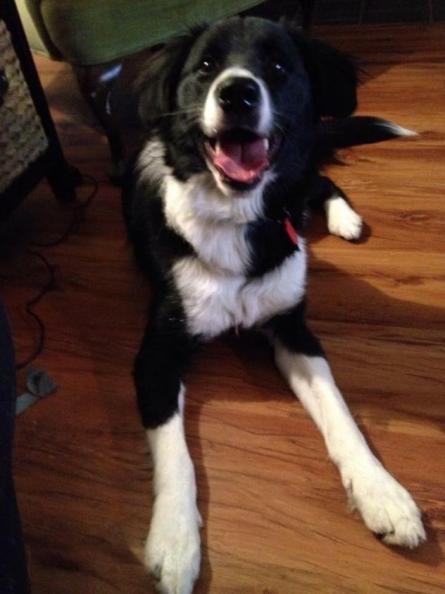 Zeke - Adopted 2015!