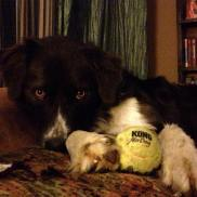 Percy Tennis Ball